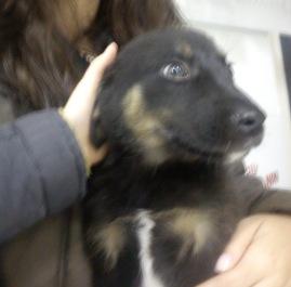 Ο Diego στον κτηνίατρο για το πρώτο του εμβόλιο
